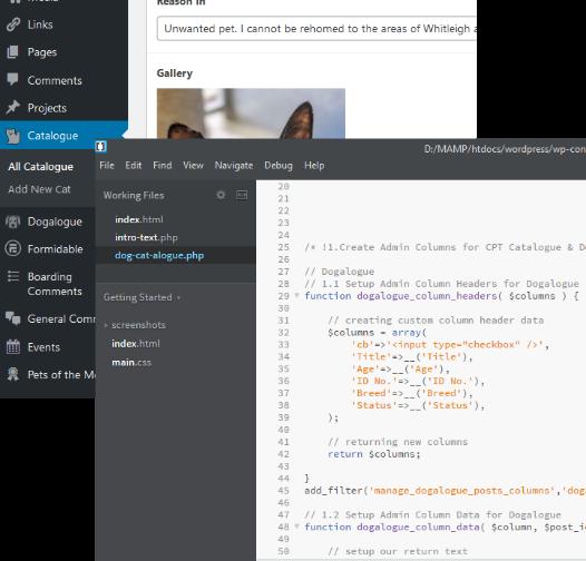 Custom Plugin Development